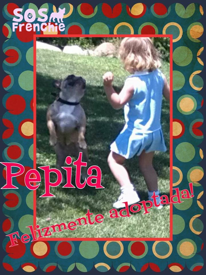 Pepita_adoptada Sos Frenchie