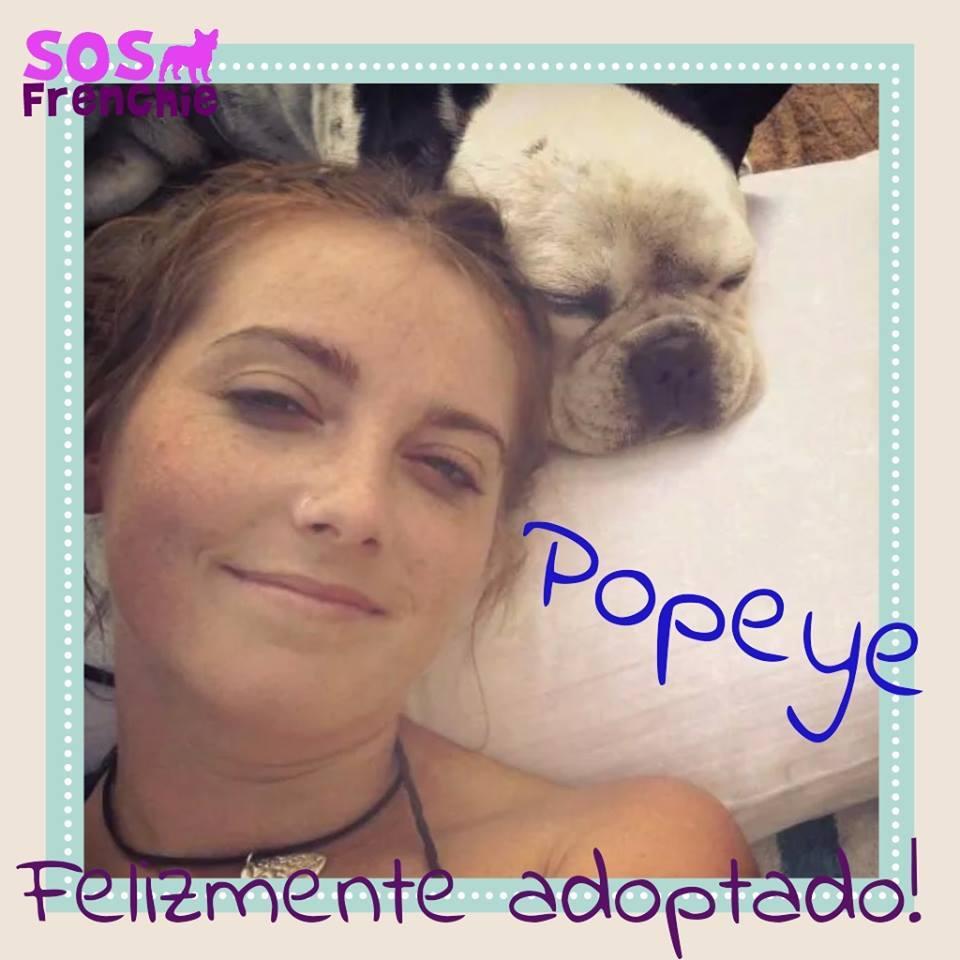 Popeye Sos Frenchie Adopciones