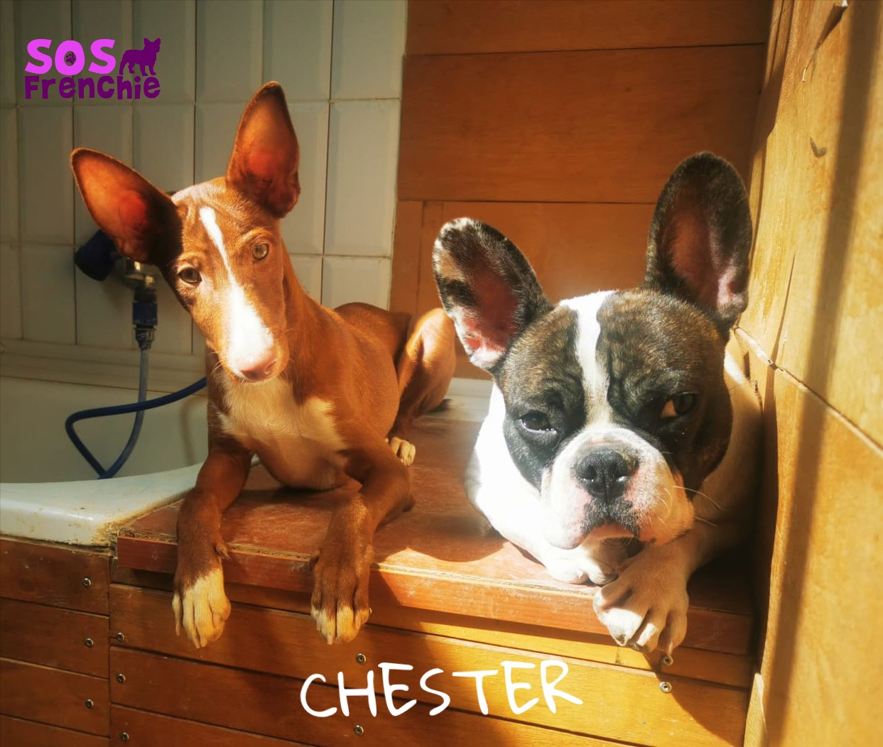 CHSTER_FACE1