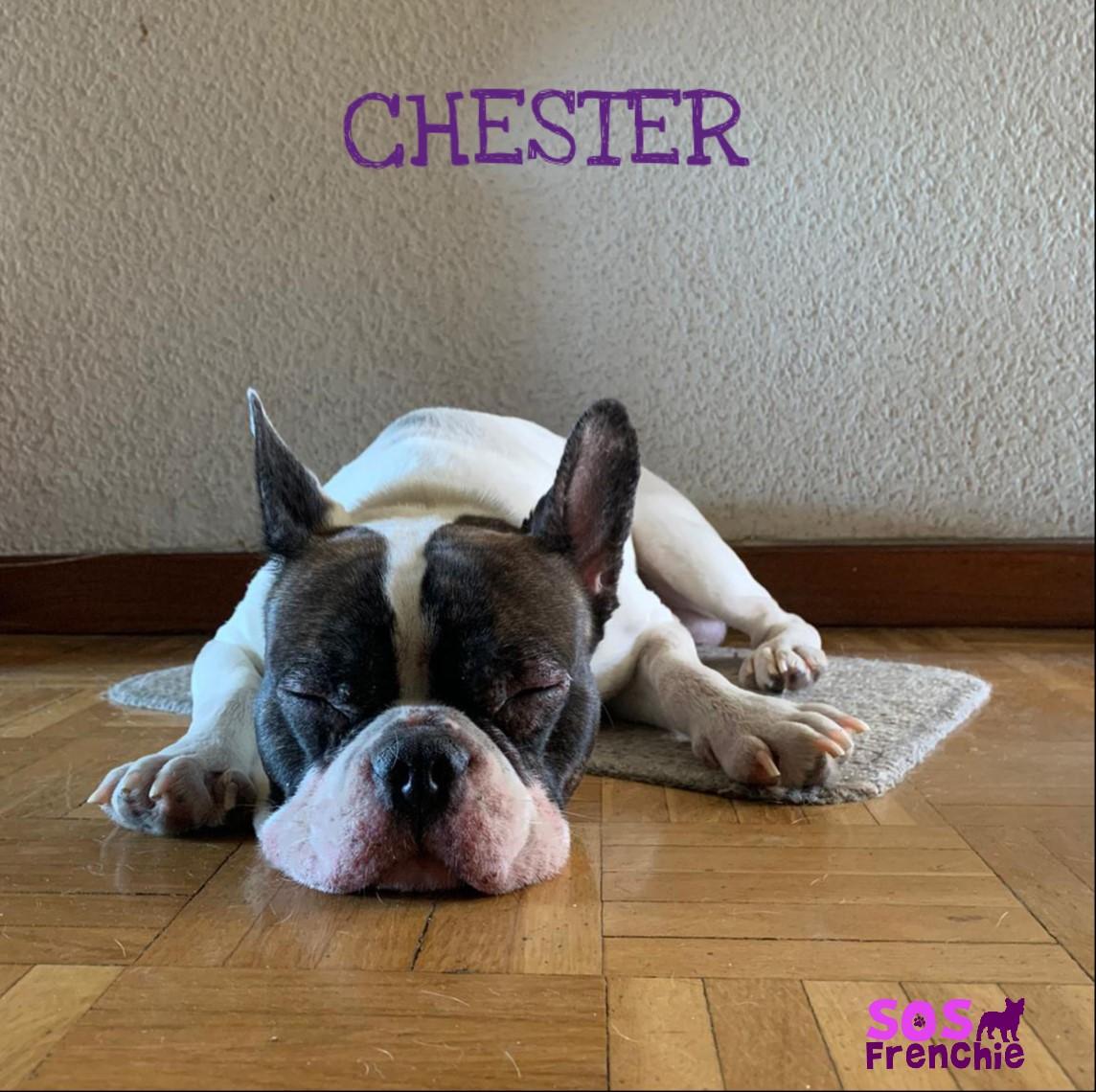 CHSTER_FACE4