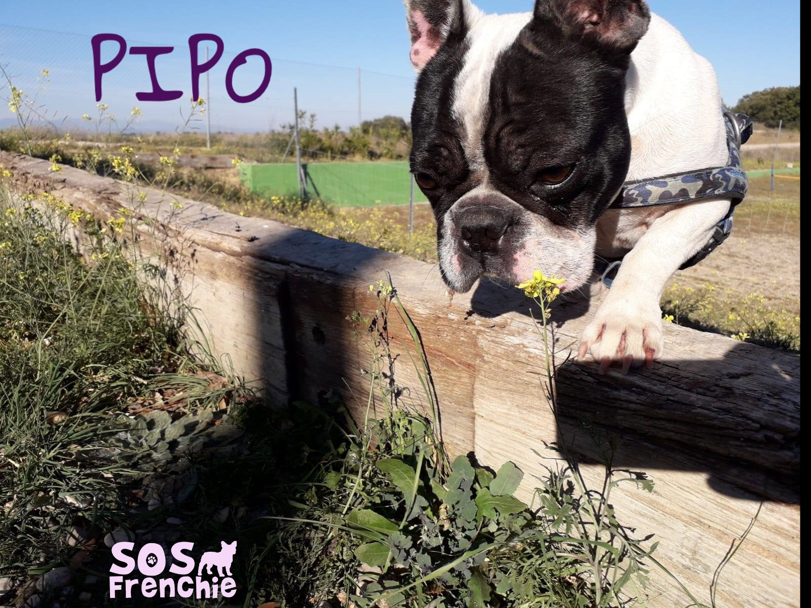 PIPO_FACE