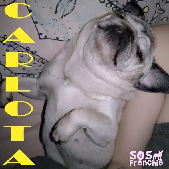 CARLOTA.1