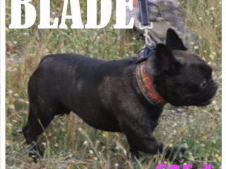 BLADE.1