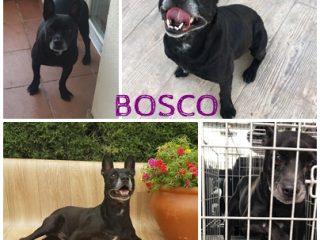 BOSCO_FACE