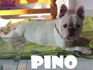 PINO.1